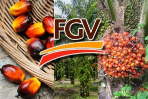 fgv-expands-to-china-650x400
