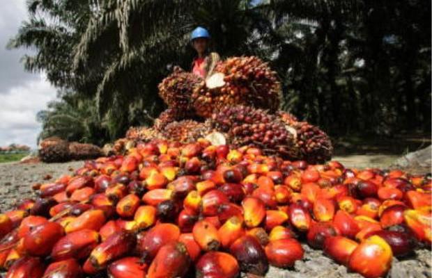 CPO_palm oil pic