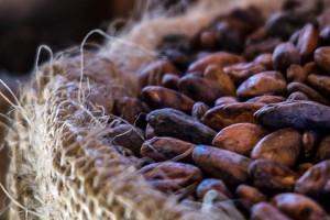 cacao-seeds