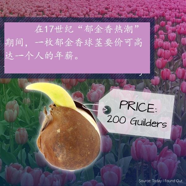 1637年,一枚郁金香球茎要价可达200荷兰盾