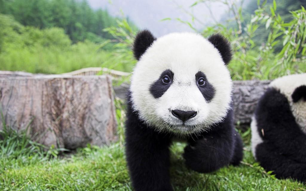 格罗斯:资本收益(capital gain)将像熊猫一样稀有