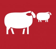 Featured Sheep