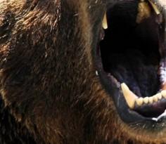 在大熊市时期,市场上再也没有所谓的避险股,更不可能有大蓝筹股股价还能再创新高