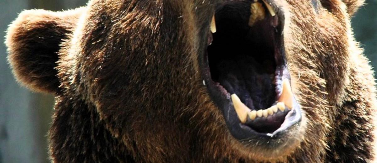 bear-roar-1200x520